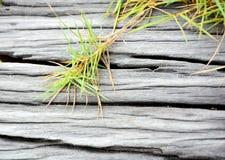 De Stomp en het gras Stock Afbeeldingen