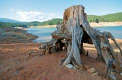 De Stomp van de boom bij een Meer royalty-vrije stock foto