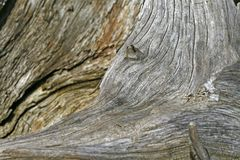 De stomp van de boom, houten structuur Stock Fotografie