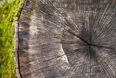 De stomp van de boom met mos Stock Afbeelding