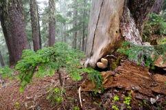 De stomp van de boom met paddestoelen Royalty-vrije Stock Foto's