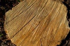 De stomp van een gezaagde boomboomstam royalty-vrije stock afbeeldingen