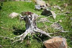 De stomp van een oude boom Royalty-vrije Stock Afbeelding