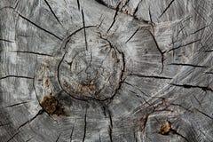 De stomp van oude boom Stock Afbeeldingen