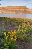 De Stoombootrots Oostelijk Washington Wildflowers Rocky Ridge van het bankenmeer Royalty-vrije Stock Afbeeldingen