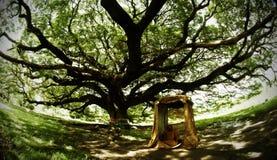 De stora trädörrsöderna av meditationen Arkivbild
