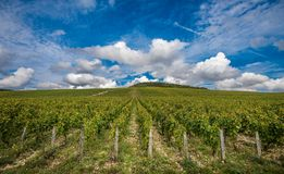 De storslagna Cru vingårdarna av Chablis, Bourgogne, Frankrike royaltyfria foton