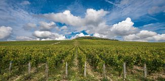 De storslagna Cru vingårdarna av Chablis, Bourgogne, Frankrike royaltyfri fotografi