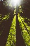 De straal die van de zon door bomen glanst Stock Fotografie