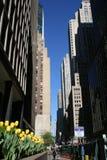 De Straat van de stad Stock Afbeeldingen