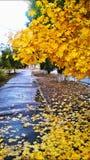 De Straat van de herfst stock fotografie
