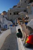 De straat van Santorini! Stock Afbeeldingen