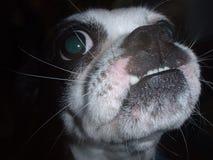 De Straathond van Underbite Royalty-vrije Stock Foto's