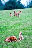 De straathonden kunnen verdwaalde honden zijn stock afbeeldingen