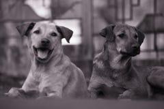 De straathonden zijn ook mooi stock afbeeldingen