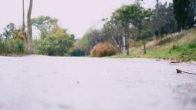 De straatkat gaat op de weg stock footage