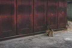 De straatkat houdt van Royalty-vrije Stock Foto