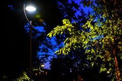 De straatlantaarn bij nacht benadrukt gebladerte royalty-vrije stock afbeeldingen