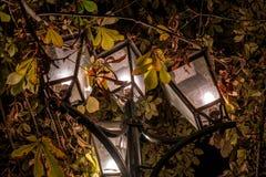 De straatlantaarn glanst bij nacht tegen de achtergrond van groen gebladerte Lantaarn met 4 schaduwen, gestileerde antiquiteit fr stock afbeelding