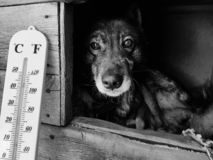 De straatthermometer met een temperatuur van Celsius en Fahrenheit en een hond kweken Laika in een hondehok stock afbeeldingen