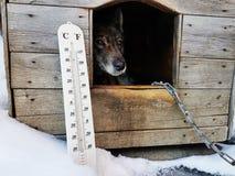 De straatthermometer met een temperatuur van Celsius en Fahrenheit en een hond kweken Laika in een hondehok royalty-vrije stock afbeeldingen