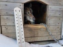 De straatthermometer met een temperatuur van Celsius en Fahrenheit en een hond kweken Laika in een hondehok stock foto's