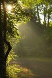 De stralen die van de zon door bomen glanzen Royalty-vrije Stock Fotografie