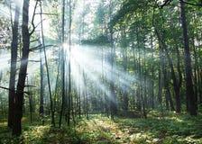 De stralen die van de zon door de bomen glanzen royalty-vrije stock afbeeldingen