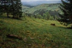 De stralen van de de mistzon van de ochtenddauw in bergen Stock Foto's