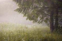 De stralen van de ochtendzon in de boom van mistbergen Stock Afbeelding