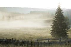 De stralen van de ochtendzon in de boom van mistbergen Royalty-vrije Stock Afbeelding