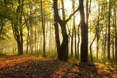 De stralen van de ochtendzon en bomensilhouetten Stock Foto