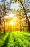 De stralen van de ochtendzon in het de lentepark Stock Fotografie
