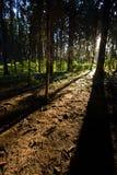 De stralen van de zon in bos Stock Fotografie