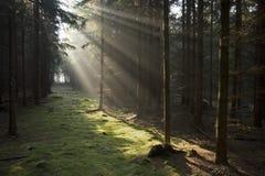 De stralen van de zon in bos Stock Foto