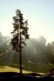 De stralen van de zon in de herfstpark Stock Foto's