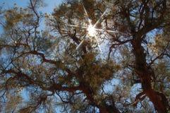 De Stralen van de zon door Bomen stock afbeelding