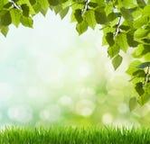 De stralen van de zon en groene bladeren Royalty-vrije Stock Foto's