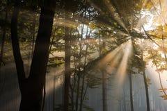De stralen van de zon in het bos Royalty-vrije Stock Foto