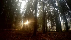 De stralen van de zon in het bos stock video