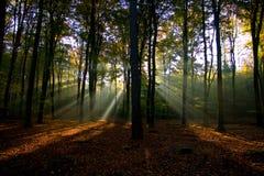 De stralen van de zon in het bos. royalty-vrije stock afbeelding