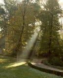 De stralen van de zon maken in de herfstpark Stock Fotografie