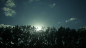 De stralen van de zon op de bovenkanten van de bomen in motie stock footage