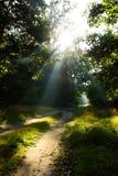De stralen van de zon op weg in groen bos Stock Foto's