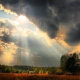 De stralen van de zon over bos Stock Foto
