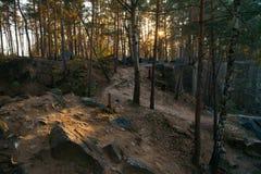 De stralen van de zonsondergangzon ` s glanzen op de weg in het hout Stock Foto's