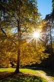 De stralen van Heldere Zon glanst door Lange Boom in Park stock foto