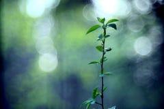 De stralen van het blad van de zonglans ontluikt de takkenlente Stock Foto