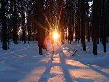 De stralen van de het plaatsen zon breken door de bomen stock fotografie