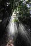 De stralen van het zonlicht Royalty-vrije Stock Afbeelding
